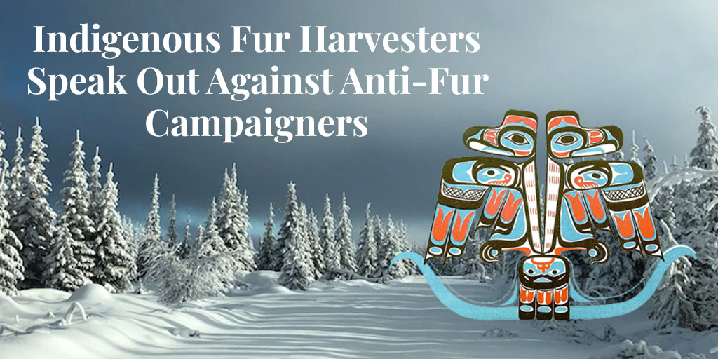 Indigenous Fur Harvesters Speak Out Against Anti-Fur Campaigners