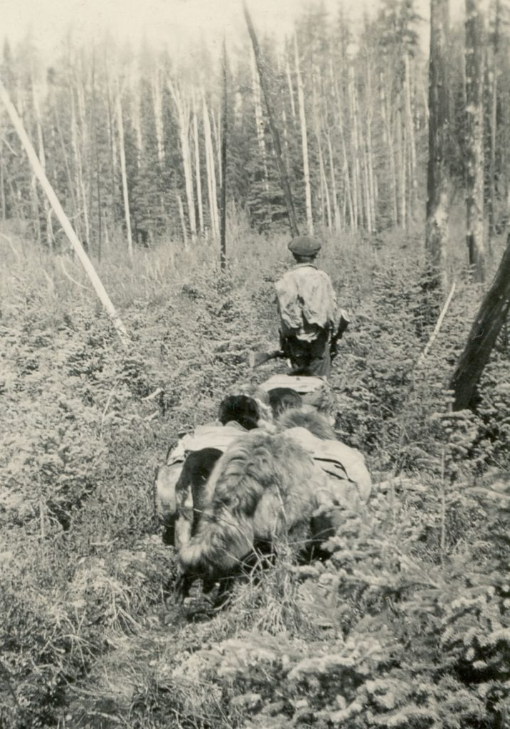 Gene Walters aged 9 early 1930s with pack dogs