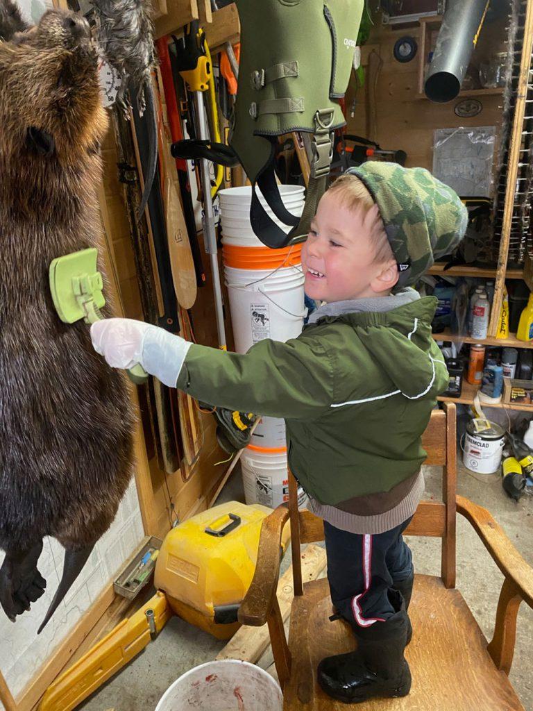 brushing beaver fur