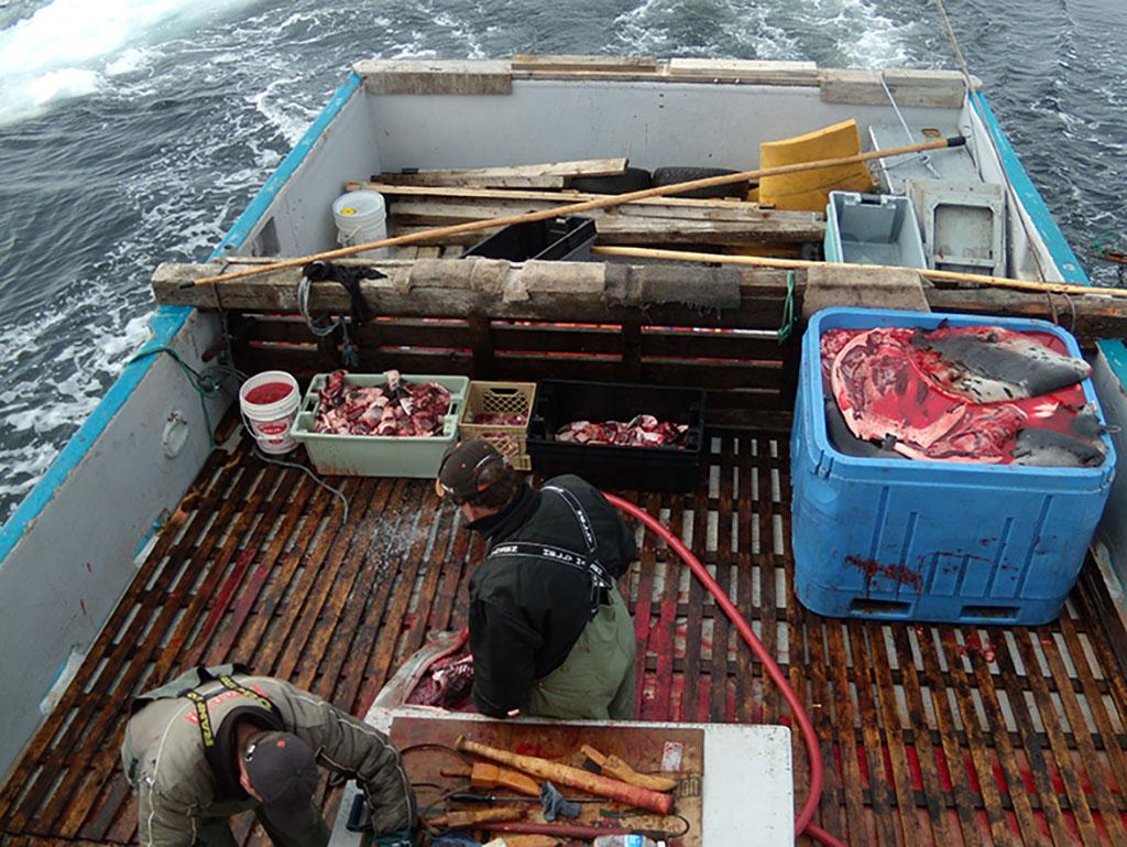 Newfoundland sealers